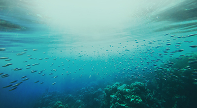 If you could invest US$1bn in one ocean solution, what would it be and why?